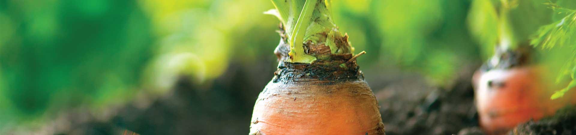 Natures-Emporium-Organic-Produce-Banner-Image